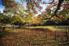 Cervi a Nara, Giappone, alla caduta fotografia stock libera da diritti