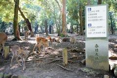 Cervi in Nara Park Fotografia Stock Libera da Diritti