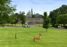 Cervi nel parco l'università cattolica di America e di basilica Immagini Stock Libere da Diritti
