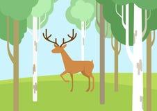 Cervi nell'animale selvatico piano di vettore del fumetto della foresta del bichwood Fotografia Stock