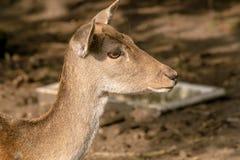 Cervi nella foresta fotografia stock