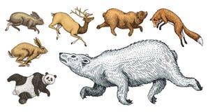 Cervi nordici salenti dell'orso bruno del coniglio della lepre di Fox rosso Metta dell'animale selvaggio della foresta che salta  royalty illustrazione gratis