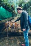 Cervi senza corni in una gabbia Fotografia Stock