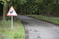 Cervi in strada - paesaggio immagini stock libere da diritti
