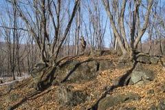 Cervi sulla roccia Immagine Stock
