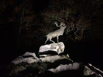 Cervi sulle scogliere alla notte Fotografia Stock Libera da Diritti