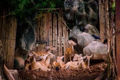 Cervi svegli Fotografia Stock Libera da Diritti
