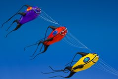 Cervi volanti dei pesci Fotografie Stock