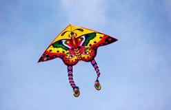 Cervi volanti della farfalla Fotografia Stock Libera da Diritti