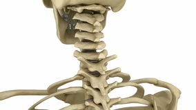 Cervical spine anatomy. Human skeleton. Medically accurate. 3D animation royalty free illustration