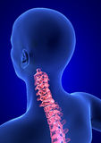 Cervical Spine Pain. Blue Human Anatomy Body 3D render on blue background Royalty Free Stock Photography