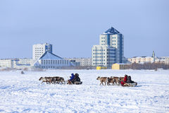 2 cervine команды против города Стоковое Фото
