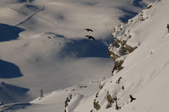 Cervinia und Zermatt Ski fahrende 5 Lizenzfreie Stockfotografie