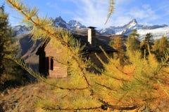 Cervino detrás y el pino del dthe de la casa conífero Imágenes de archivo libres de regalías