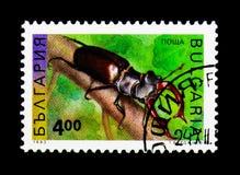 Cervo di Lucanus del cervo volante, serie degli insetti, circa 1993 Immagine Stock