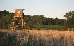 Cervo-esteja Foto de Stock