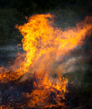 Cervo no fogo Foto de Stock Royalty Free