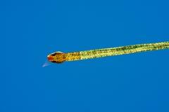 Cervo volante del drago contro cielo blu libero Fotografia Stock Libera da Diritti