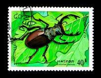 Cervo volante (cervo) di Lucanus, serie degli insetti, circa 1995 Fotografia Stock Libera da Diritti