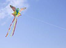 Cervo volante variopinto Fotografia Stock