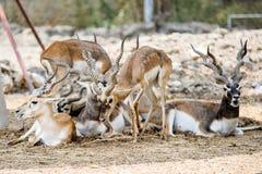 Cervos bonitos fotos de stock