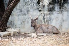 Cervos bonitos foto de stock