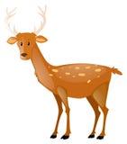 Cervos bonitos no fundo branco Fotos de Stock Royalty Free
