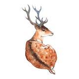 Cervos da aquarela com o animal da madeira dos chifres Fotografia de Stock Royalty Free