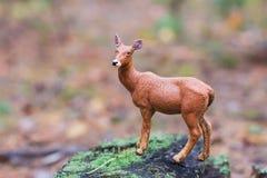 Cervos da estatueta na floresta do outono Foto de Stock Royalty Free