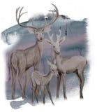 Cervos da família do inverno da aquarela na floresta ilustração do vetor