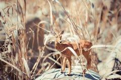 Cervos de ovas do brinquedo na grama alta Foto de Stock