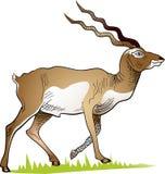 Cervos de passeio no prado ilustração stock