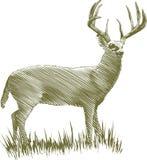 Cervos do bloco xilográfico Foto de Stock Royalty Free