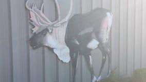 Cervos dos alces Imagem de Stock