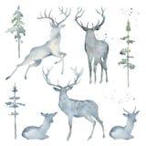 Cervos e árvores da aquarela imagem de stock