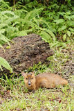 Cervos em ao ar livre. Foto de Stock