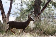 Cervos em um dia de inverno fotos de stock royalty free
