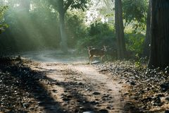 Cervos manchados sob raios do sol fotos de stock