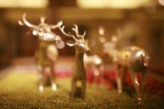 Cervos modelo fotografia de stock