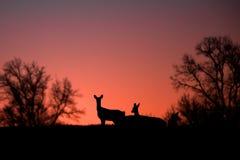 Cervos mostrados em silhueta contra árvores e sol Imagem de Stock