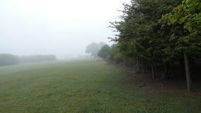 Cervos na distância de um amanhecer Misty English Springtime Meadow 5 imagem de stock royalty free