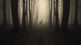 Cervos na estrada na floresta escura misteriosa Imagens de Stock Royalty Free