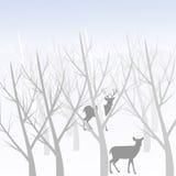 Cervos na floresta Fotos de Stock Royalty Free