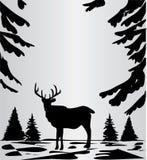 Cervos nas madeiras Imagens de Stock Royalty Free