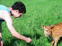 Cervos pequenos da grama de alimentações do homem novo na natureza Fotos de Stock Royalty Free