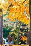Cervos perto do templo de Todaiji em Nara, Japão Imagem de Stock Royalty Free