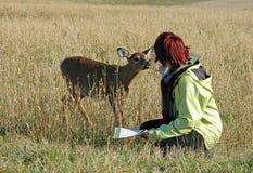 Cervos que petting imagens de stock
