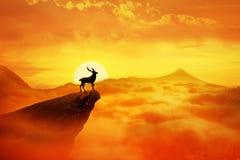 Cervos sós Fotografia de Stock Royalty Free