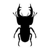 Силуэт насекомого Рогач-жук Cervus Lucanus Эскиз рогач-жука рогач-жук на белой предпосылке Рука Стоковая Фотография RF