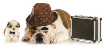 Cães de funcionamento Fotografia de Stock